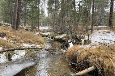 Saxon Creek Restoration Project