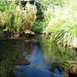 2010_9_22_Glenbrook-Creek-7